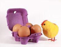 uovo-o-gallina